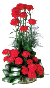 An arrangement 25 Carnations -Cake delivery to Gwalior