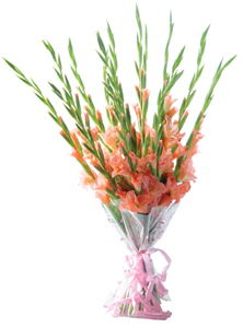 A hand tied bunch of 15 fresh Gladioli. cake delivery Delhi