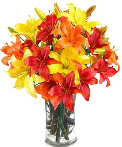 Mix Asiatic Lilliums in a glass vase -Cake delivery to Gwalior