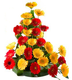 Basket of 20 Mix color gerberas cake delivery Delhi