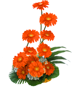 Basket arangement of 12 Gerberas cake delivery Delhi